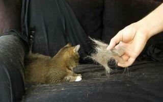 Как избавиться от кошачьей шерсти — простые способы и важные рекомендации