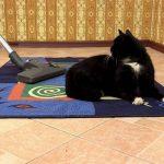пылесос против кошачьей шерсти на ковре