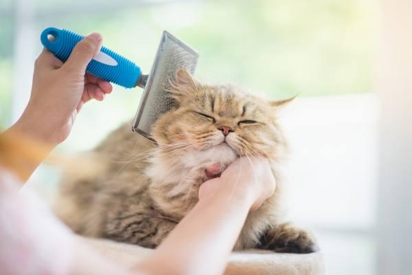профилактика от кошачьей шерсти