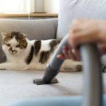 пылесос против кошачьей шерсти на мебели